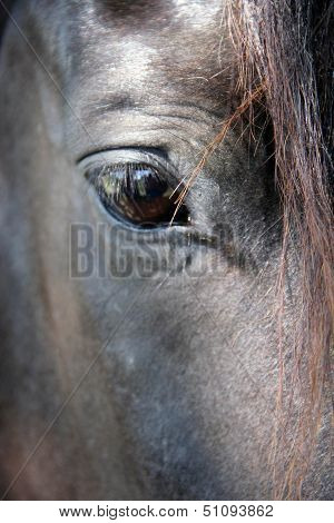 In the eyes of a horse