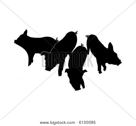 Pigs silhouettes on white background