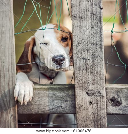 Neglected dog behind fence (shallow focus)