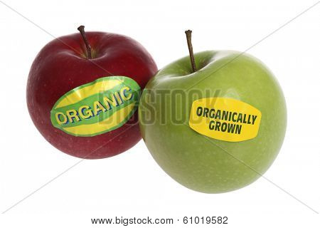 Organic red and green apple on white background
