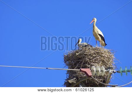 Stork in a high tension tower in saragossa, Aragon, Spain