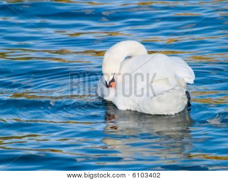 Swan Cleaning