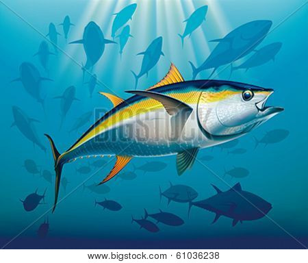 Shoal of yellowfin tuna in deep water. Realistic vector illustration.