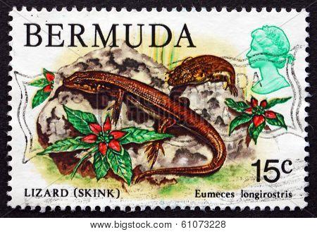 Postage Stamp Bermuda 1979 Bermuda Skink, Reptile
