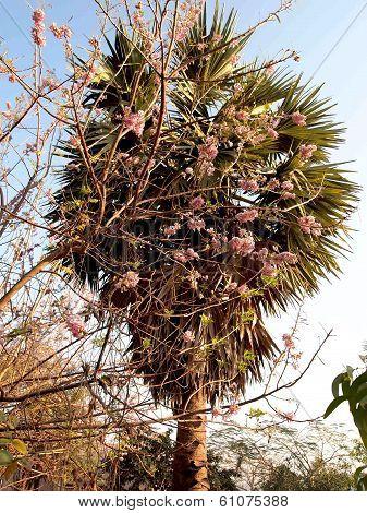 shrubs palm tree