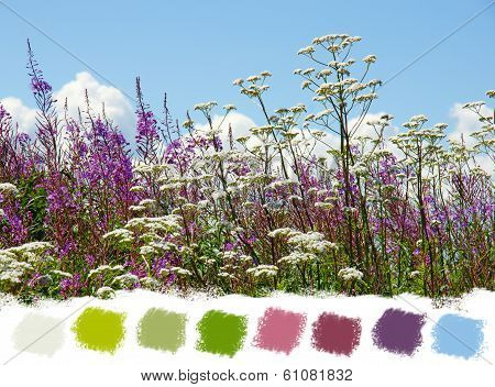 Beautiful Wildflowers Color Palette