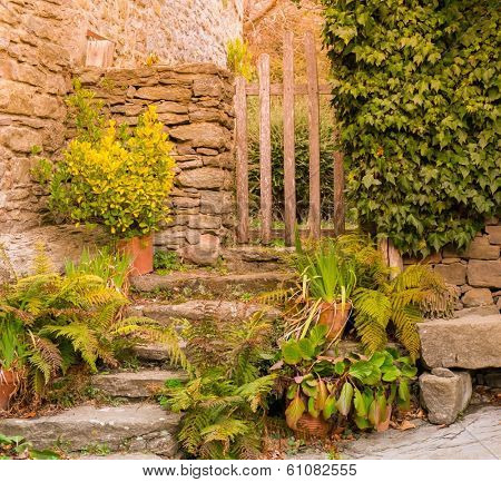 Old steps with different plant and wicket
