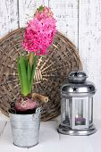 Pink hyacinth in bucket with decorative lantern on table on wooden background