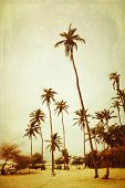 Tall palm trees on a beach, cross processed to look like an aged instant picture with texture