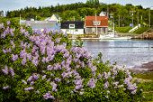 stock photo of lobster boat  - Spring lilacs flower along the shore in Stanley Bridge - JPG
