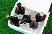 Ice chest full of drinks in bottles on grass background