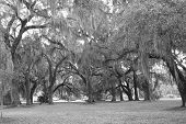 stock photo of jekyll  - Jekyll Island is a National Park in Georgia - JPG