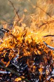 stock photo of ember  - fire and red embers in the fire - JPG