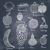 Stylish fruit and berries set in vector. Lemon, redcurrant, apple, strawberry, banana, grape, pomegr