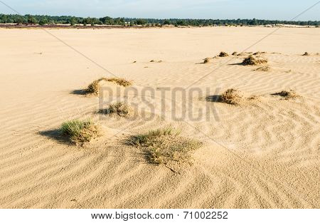 Small Sand Drifts In A Nature Reserve