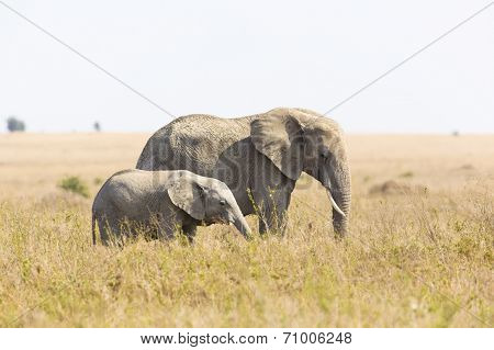 Elephant mother with baby elephant in Africa