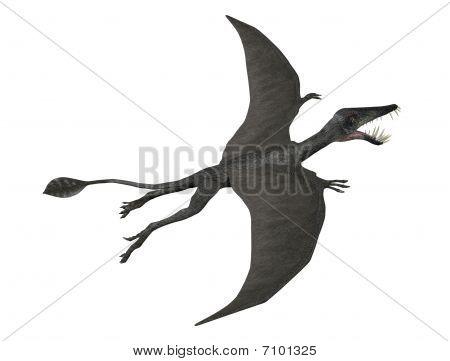 Dorygnathus em vôo