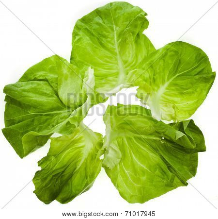 Lettuce Salad Leaves Top View Surface Isolated On White Background