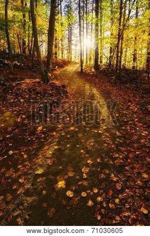 Sunlight Path In A Fall Forest