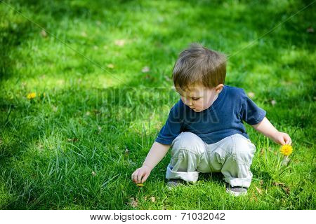 Young Boy Picking Dandelion Flowers