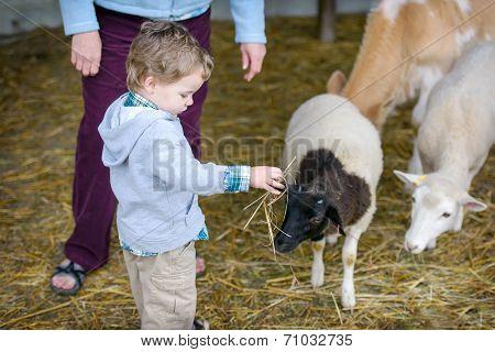 Boy Plays With Hay