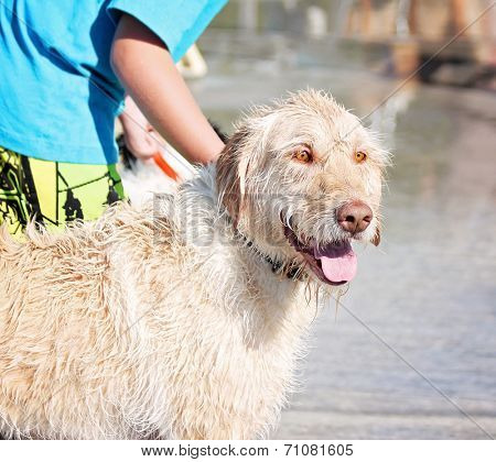 a dog having fun at a local public pool