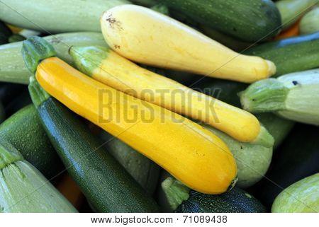 Organic Squash From Garden