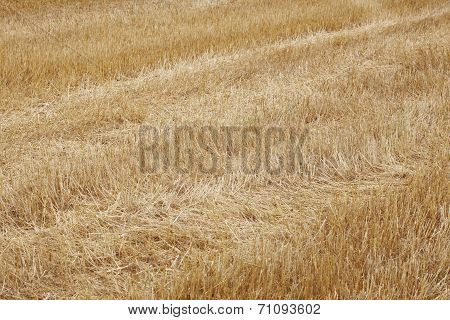 Dry Ground With Spikes In Yellow Tone