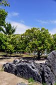pic of french culture  - A culturally significant site in the south of raiatea island in French Polynesia - JPG