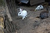 image of foodchain  - Many different rabbit at zoo pose for watching - JPG