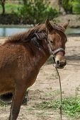 picture of horse face  - Closeup brown horses Thailand faces behind the canal - JPG