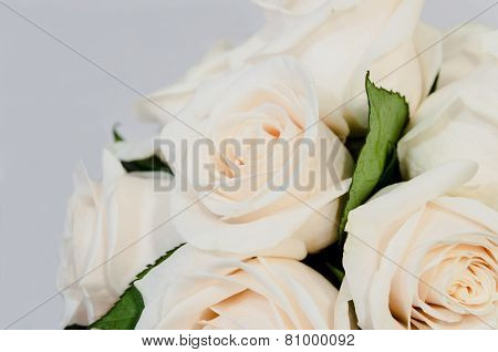 Deteail Of A White Rose