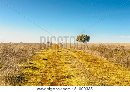 Rural Road In A Field