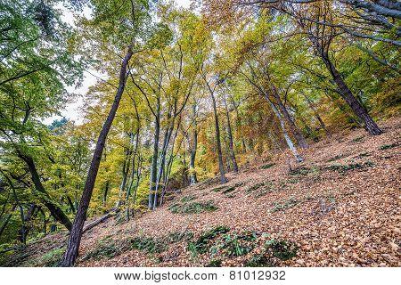 Autumn In Gdynia
