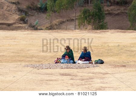 Woman Peasants Collecting Moraya Potatoes