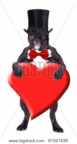 French Bulldog In A Black Top Hat