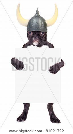 French Bulldog Puppy In A Viking Helmet