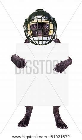 French Bulldog Rugby Helmet