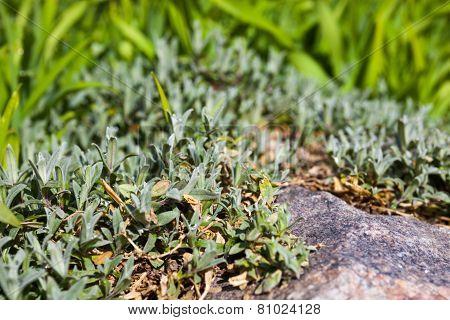 Lush Spring Vegetation Near The Gray Stone