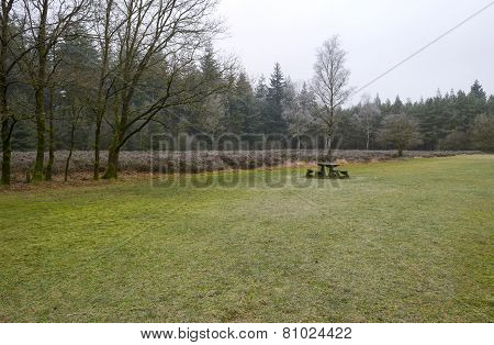 Picnic table in a clearing of a pine forest in winter