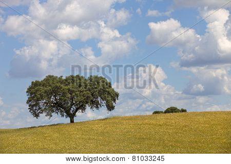 alentejo farm view, in the south of portugal