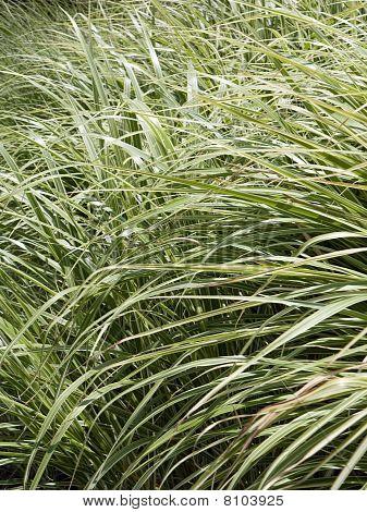 Grasscade
