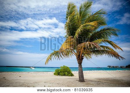 Palm Tree In Harbor