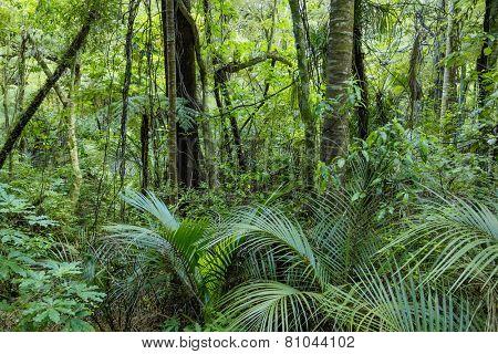 Lush Green Tropical Jungle
