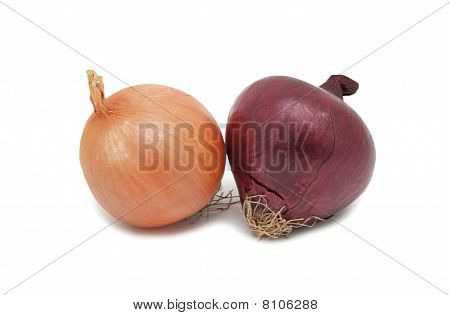 Onions, Isolated