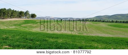 Panorama of green fields and meadows in spring