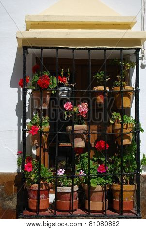 Window with plant pots, Ronda.