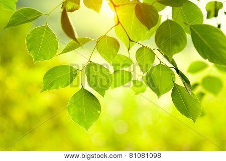 Green leaves glowing