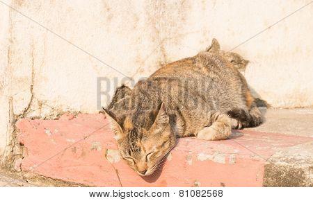 the sleepy wild cat