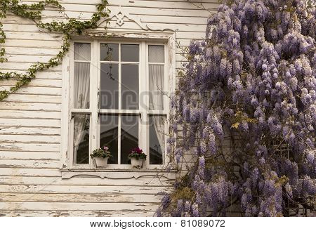 Window with lilac Flower